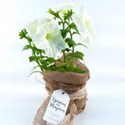 Αναμνηστικό φυτό διακοσμημένο με τσουβαλάκι για γάμο